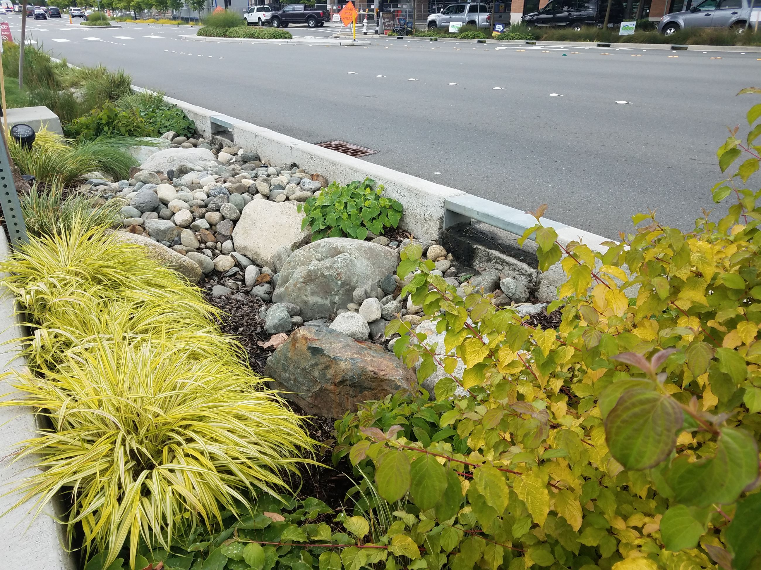 Rain garden on east side of Multiway Boulevard (JPG)